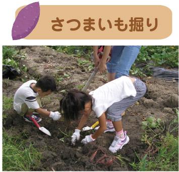 fruit_photo_04