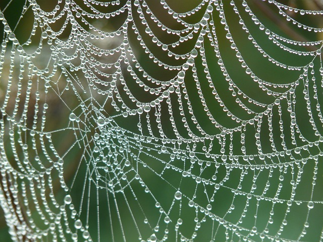 cobweb-4193_640