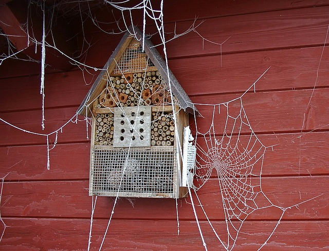 spider-webs-1153700_640