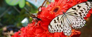 butterfly_garden_changi